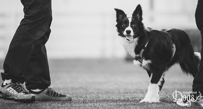 Foundation Training - The Building Blocks Of Your Dog's Life