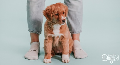 Why does understanding the dog's point of view make you the best dog owner ever?