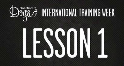 International Training Week - Agility In A Nutshell 1