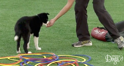 Familiarize Your Dog With Different Surfaces