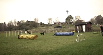Agility Challenge Inspiration From Sweden!