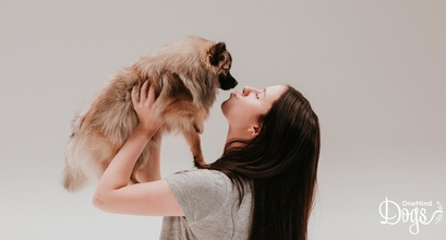 5 reasons why people decided to invest in OneMind Dogs