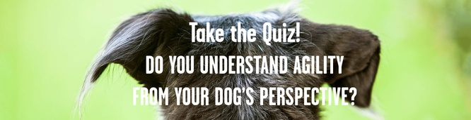 Photo quiz! Can you speak dog?