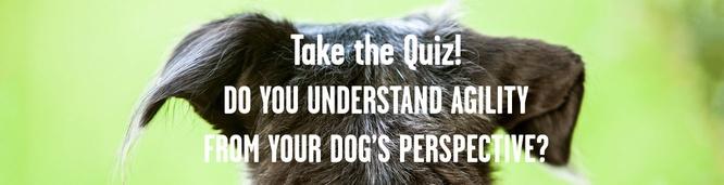 Photo quiz! Can you speak dog?