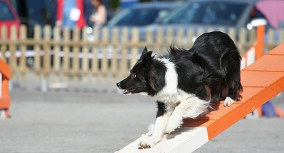 The Massive Change A Deaf Dog Made To Dog Agility