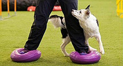 Dobo - Exercise For Dog And Handler