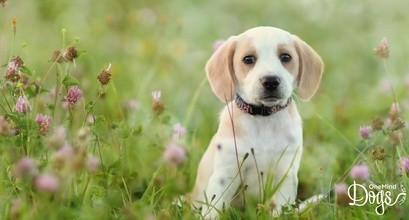 Why the first 16 weeks in a puppy's life are so important