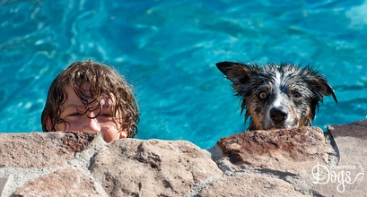 7 Tips To Help Your Dog Stay Cool This Summer