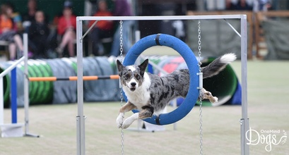 How to make agility competitions fun again?