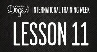 International Training Week - Training the Flick