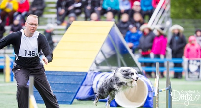 What is dog agility?