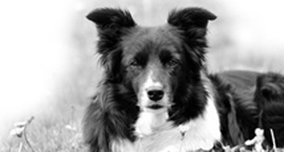 Tekla – The Deaf Dog Who Taught Us To Listen