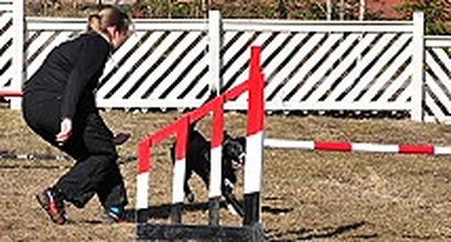 Foundation Of OneMind Dogs Method: C-C-C