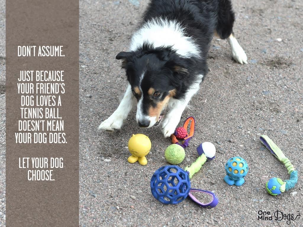 Rewarding Let Your Dog Choose Onemind Dogs