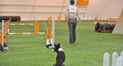 Managing Dogs With Trial Stress