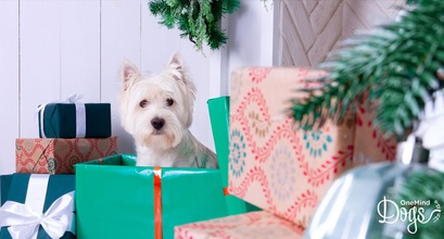 Fun And Practical Howliday Gift Ideas For Your Dog