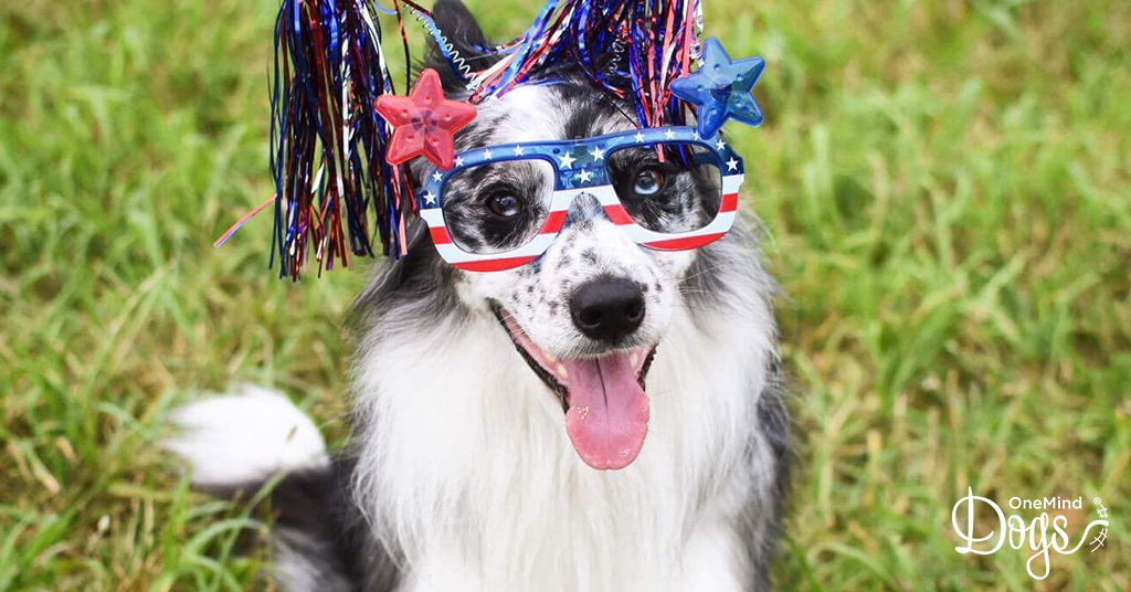 Happy 4th of July! Photo by: Perry DeWitt.