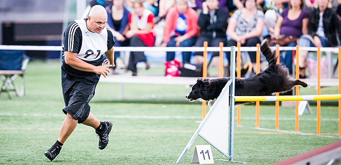 Running On The Dog's Line